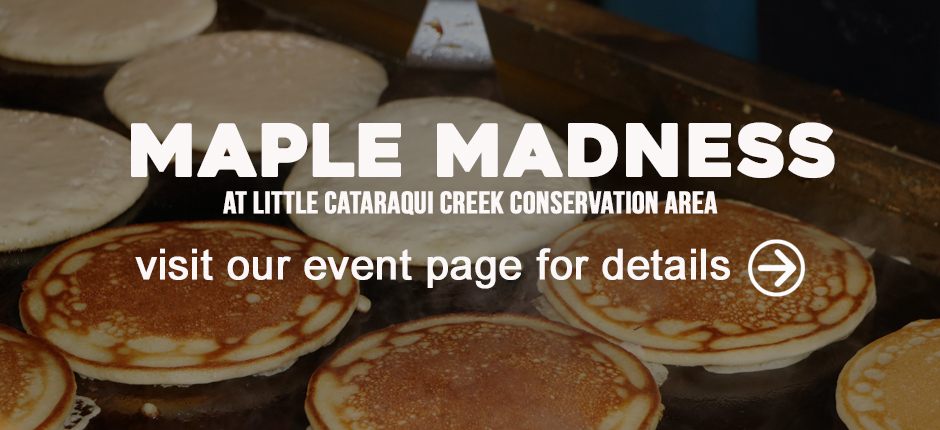 Maple Madness at Little Cataraqui Creek Conservation Area